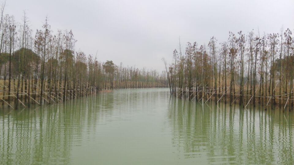 湿地植被的种植和更新