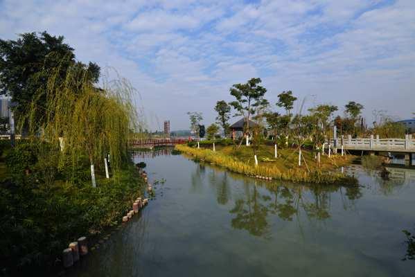 第四条湿地植被的种植和更新